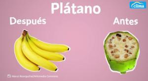 Asombroso cambio de las frutas en años. ¡No se parecen en nada!